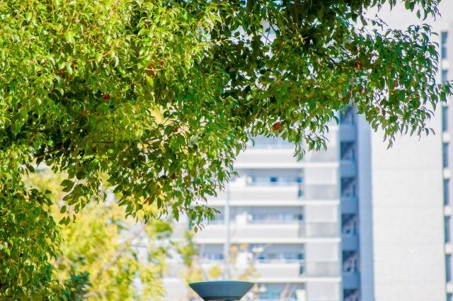 太陽の光に透ける緑の木と分譲マンション