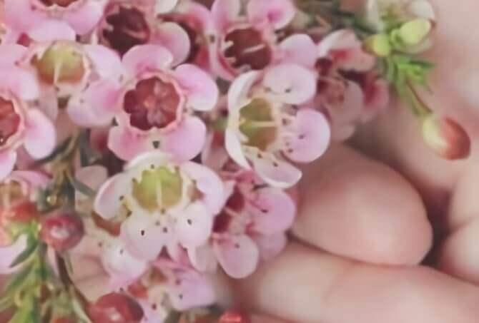 手のひらに花 waifu2x-caffeで3倍に拡大